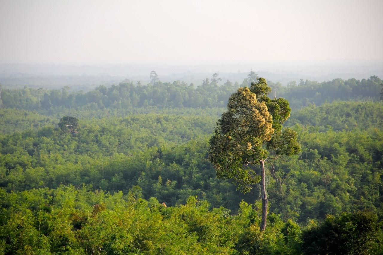 prašuma jungle-1029330_1280