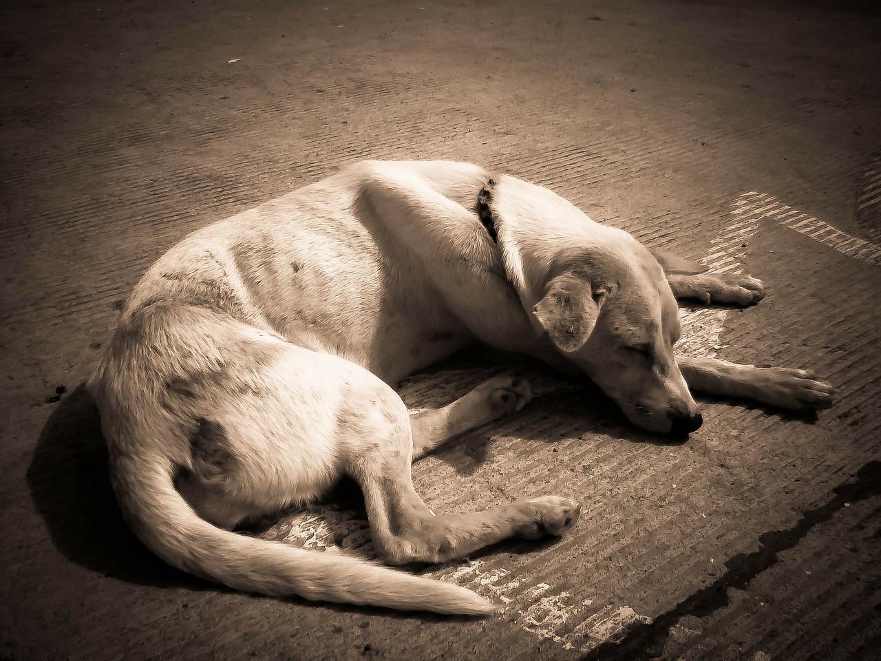 dog-218110_1280