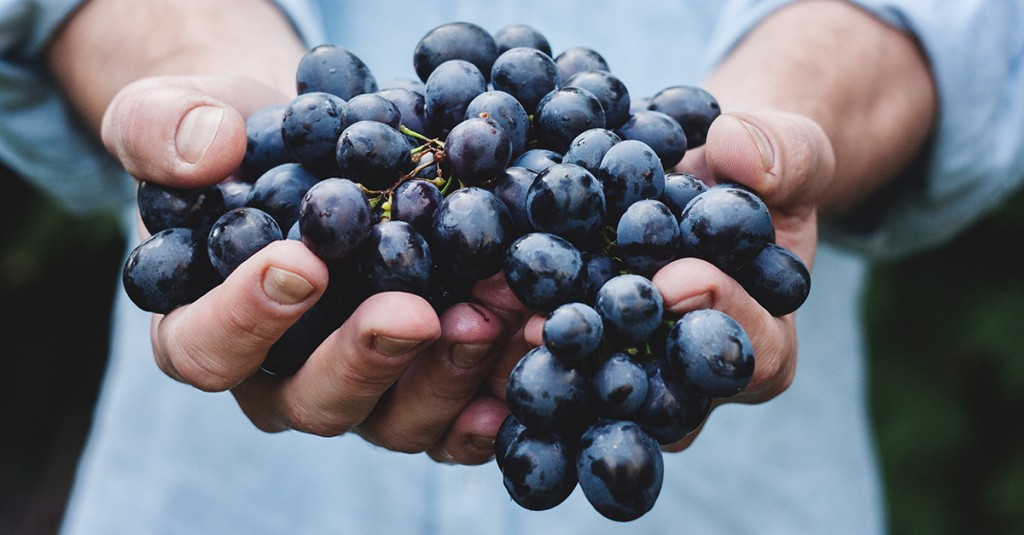 vrsacki vinogradi